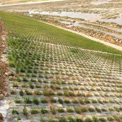 河坝生态砖施工